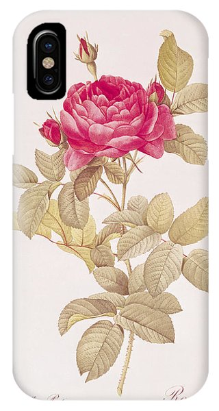 Rosa Gallica Pontiana IPhone Case