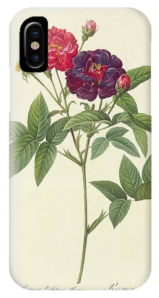 Botanical iPhone Case - Rosa Gallica Purpurea Velutina by Pierre Joseph Redoute