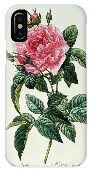 Redoute iPhone Case - Rosa Gallica Regalis by Pierre Joseph Redoute