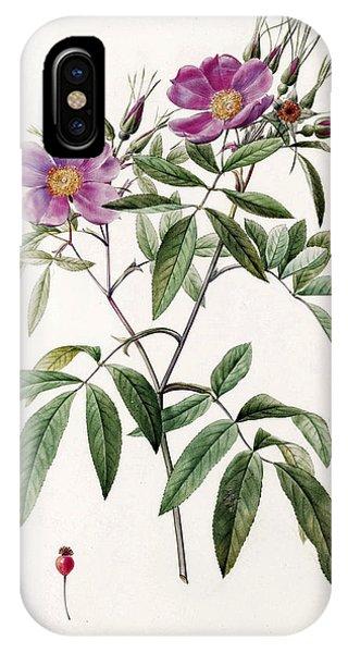 Rosa iPhone Case - Rosa Hudsoniana Salicifolia by Pierre-Joseph Redoute
