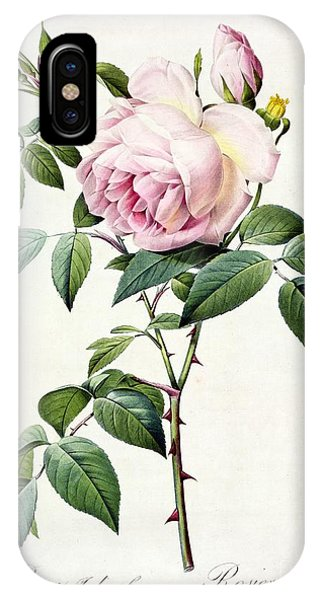 Botanical iPhone Case - Rosa Indica Fragrans by Pierre Joseph Redoute