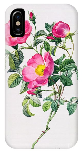 Rose iPhone X / XS Case - Rosa Lumila by Pierre Joseph Redoute