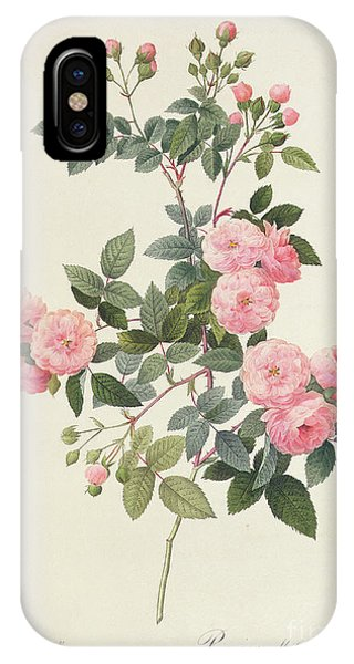 Garden iPhone X Case - Rosa Multiflora Carnea by Pierre Joseph Redoute