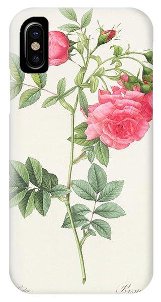 Rosa iPhone Case - Rosa Pimpinellifolia Flore Variegato  by Pierre Joseph Redoute