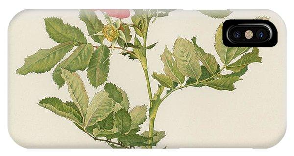 Rosa iPhone Case - Rosa Pratincola by English School