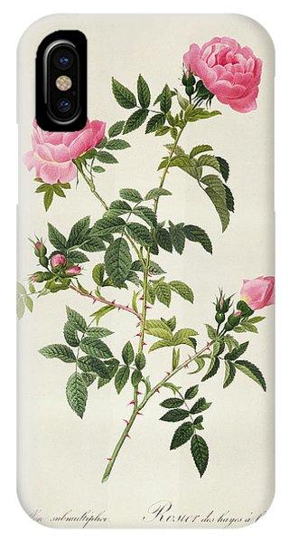 Rosa iPhone Case - Rosa Sepium Flore Submultiplici by Pierre Joseph Redoute