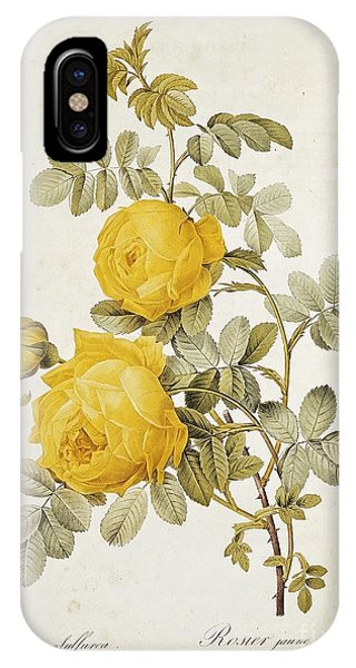 Botanical iPhone Case - Rosa Sulfurea by Pierre Redoute
