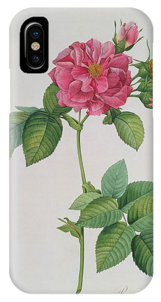 Botanical iPhone Case - Rosa Turbinata by Pierre Joseph Redoute
