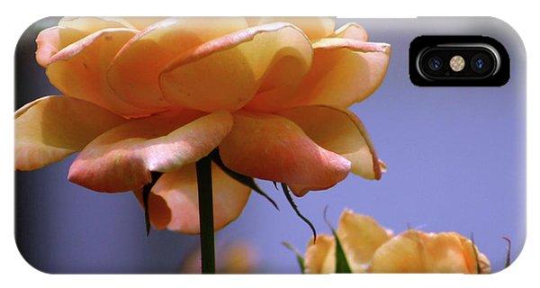 Rose 1156 H_2 IPhone Case