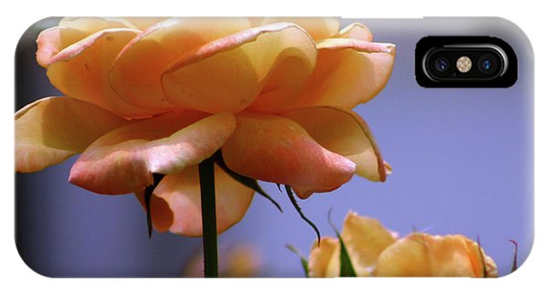 Rose 1156 H_2 IPhone Case