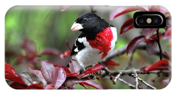 Rose-breasted Grosbeak IPhone Case