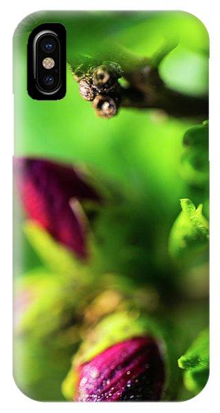 Rose Buds Body Guard IPhone Case
