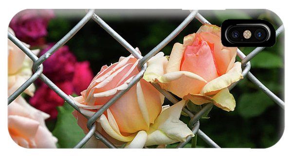 Rose Fence IPhone Case