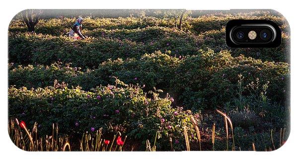 Rose Harvest IPhone Case