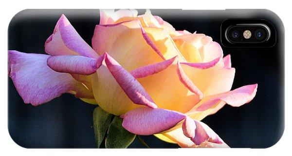 Rose In Sunshine IPhone Case