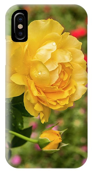 Rose, Julia Child IPhone Case