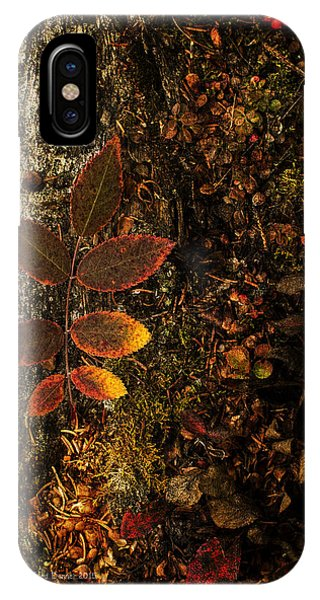 Rose Leaf And The Forest Floor IPhone Case