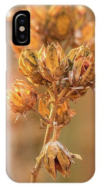 Rose Of Sharon In Winter IPhone Case