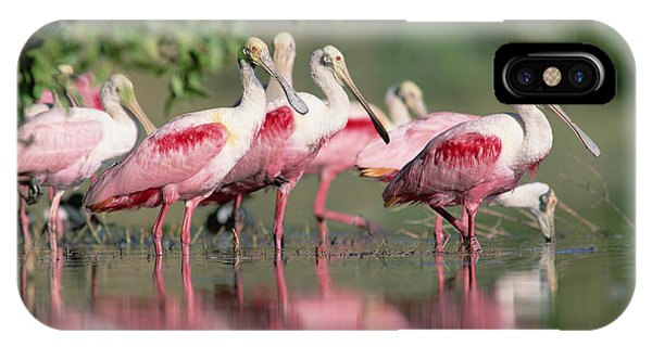 Roseate Spoonbill Flock Wading In Pond IPhone Case