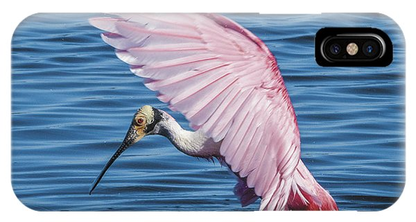 Roseate Spoonbill Profile With Wings Over Her Head IPhone Case