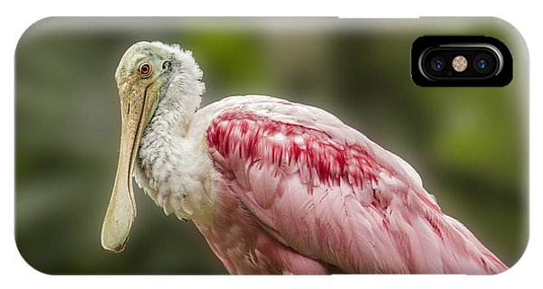 Rosette Spoonbill IPhone Case
