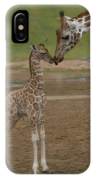 Rothschild Giraffe Giraffa IPhone Case