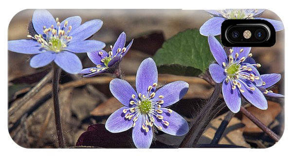 Round-lobed Hepatica Dspf116 IPhone Case