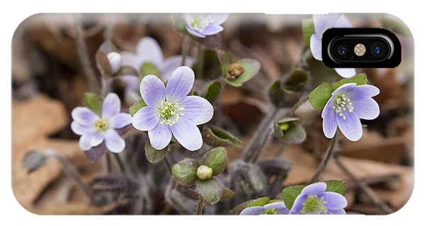 Round Lobed Hepatica Panorama IPhone Case