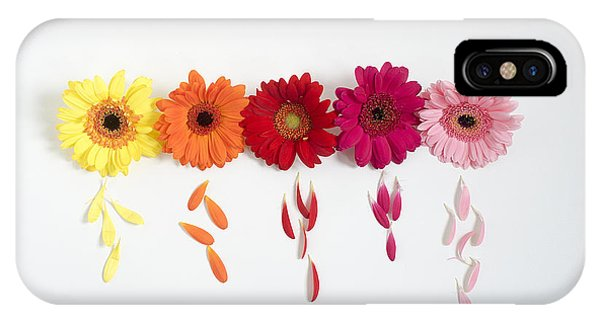 Row Of Gerbera Daisies On White Background IPhone Case
