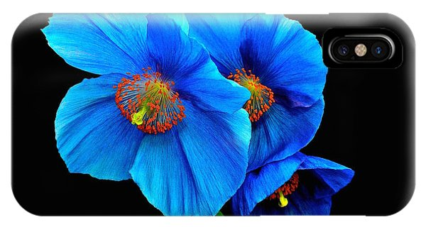 Royal Blue Poppies IPhone Case