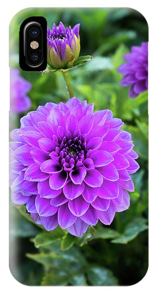 Royal Dahlia Delight IPhone Case