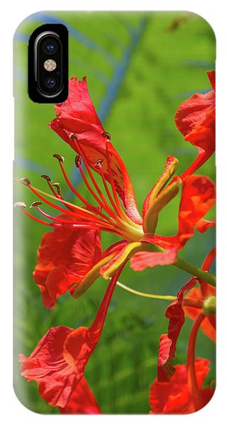 Royal Poinciana Flower IPhone Case