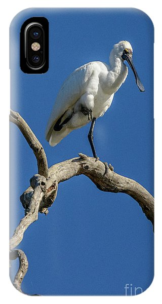 Royal Spoonbill 01 IPhone Case
