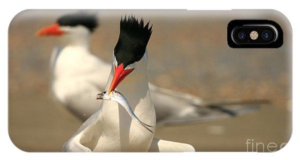 Royal Tern Catch IPhone Case