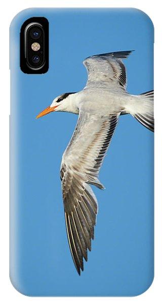 Royal Tern In Flight IPhone Case