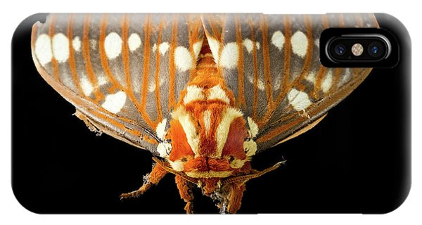 Royal Walnut Moth On Black IPhone Case