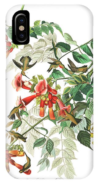 Humming Bird iPhone Case - Ruby-throated Humming Bird by John James Audubon