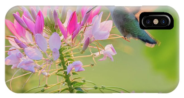 Ruby Throated Hummingbird 3 Square IPhone Case
