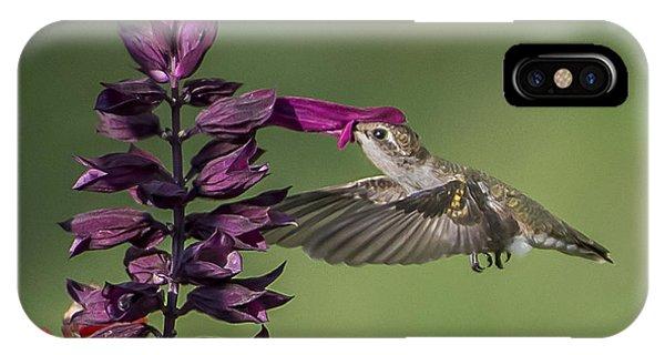 Ruby Throated Hummingbird At Purple Salvia Flower IPhone Case