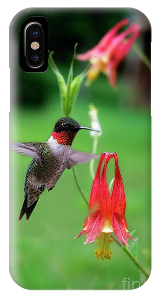 IPhone Case featuring the photograph Ruby-throated Hummingbird  Looking For Food by Dan Friend