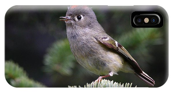 Rubycrowned Kinglet IPhone Case