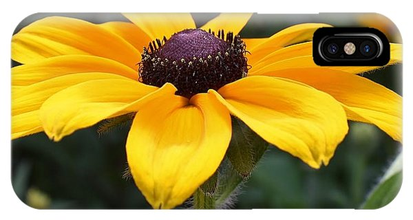 Rudbeckia Bloom Up Close IPhone Case