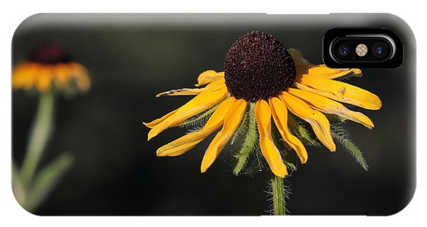 Rudbeckia Hirta IPhone Case