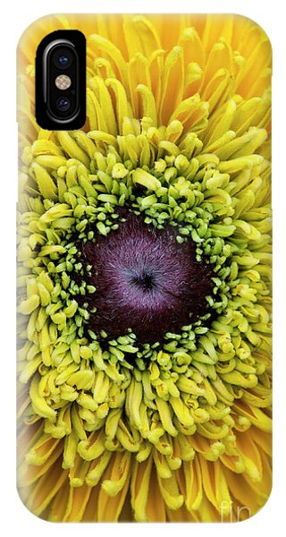 Maya iPhone Case - Rudbeckia Hirta Maya by Tim Gainey