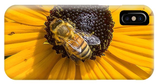 Rudbeckia With Bee IPhone Case