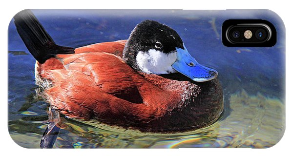 Ruddy Duck 2 IPhone Case