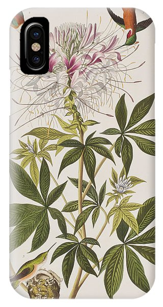 Humming Bird iPhone Case - Ruff-necked Hummingbird by John James Audubon