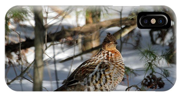 Ruffed Grouse In Winter IPhone Case