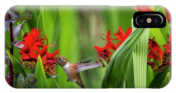 Rufous Hummingbird Feeding, No. 3 IPhone Case