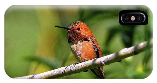 Rufous Hummingbird IPhone Case